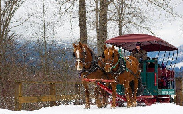 Blackcomb Sleigh rides at Nicklaus North