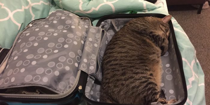 Pet Friendly Travel: Charlie's Experience