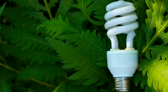 What Does It Mean To Be Eco-Friendly?