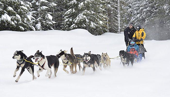 Dogsledding in Whistler