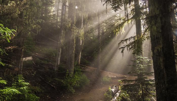 Best Hikes in Whistler